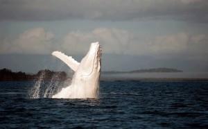 WhaleAngel